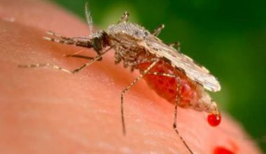 WHO approves malaria vaccine to protect African children