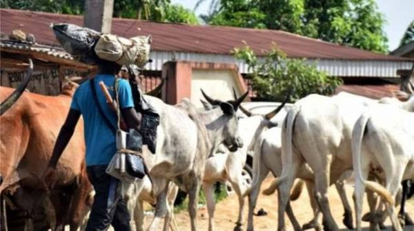 Panic as armed foreign Fulani herders invade Oyo state